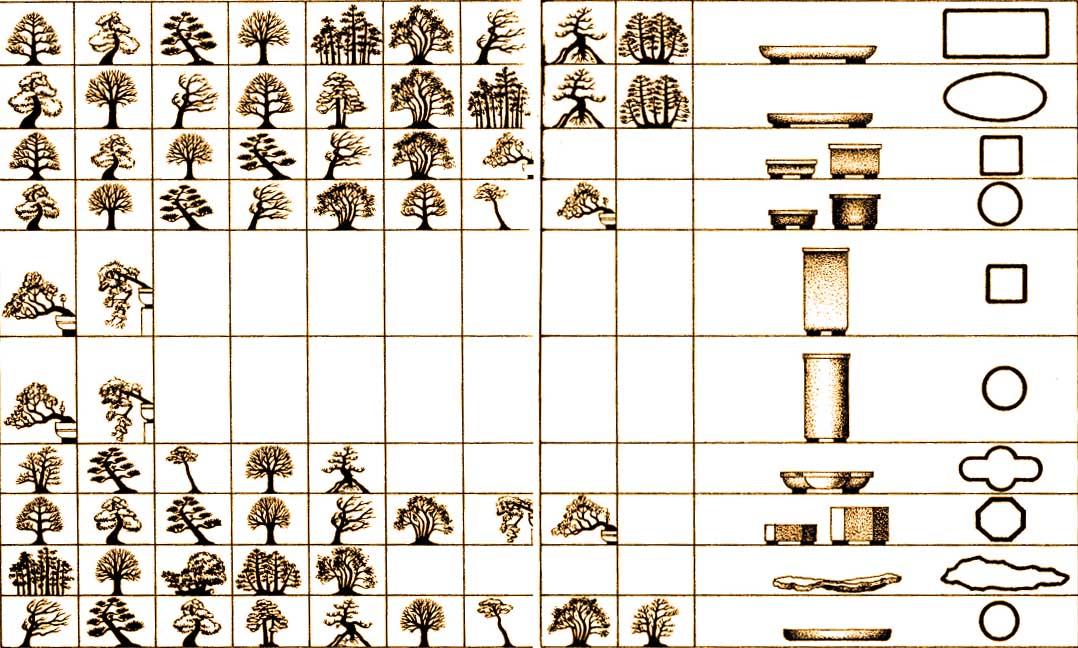 wybór pojemnika na bonsai