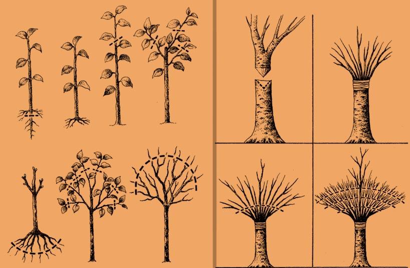 Tworzenie bonsai w stylu Hokidachi