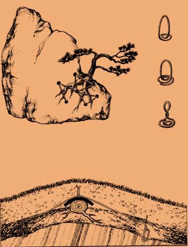 Tworzenie bonsai w stylu Ishizuke cz.1