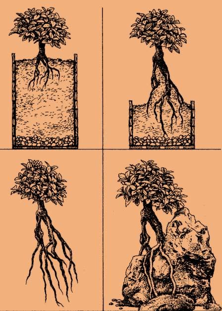 Tworzenie bonsai w stylu Ishizuke cz.3
