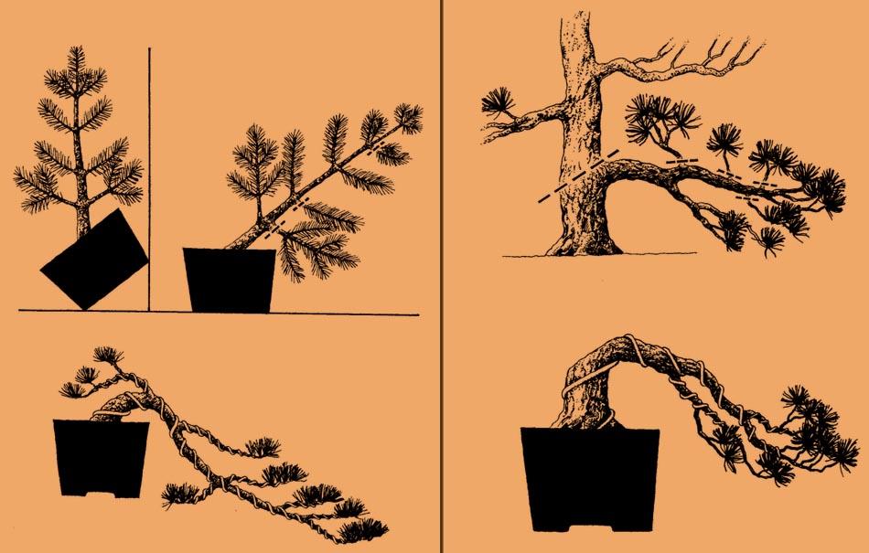 Tworzenie bonsai w stylu Kengai