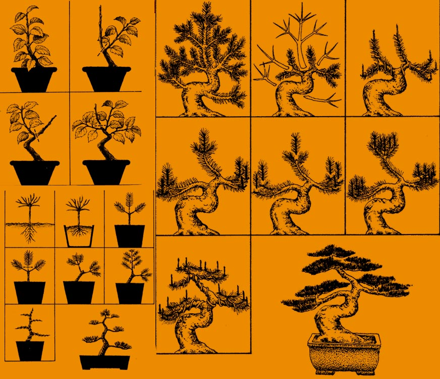 Tworzenie bonsai w stylu Moyogi